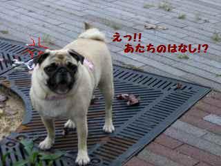 CIMG6770-1.jpg