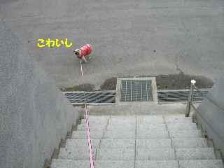 CIMG7825-1.jpg