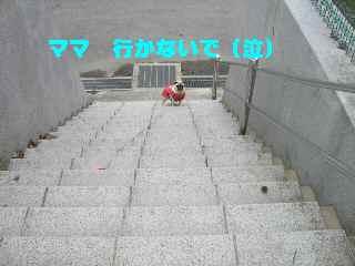 CIMG7829-1.jpg