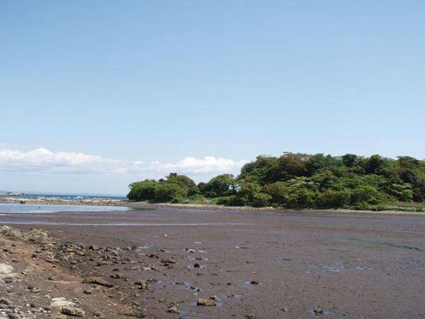 江奈の干潟