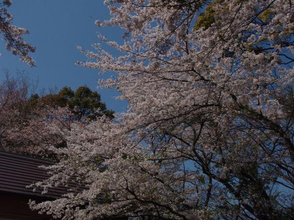 kinugasa4.jpg
