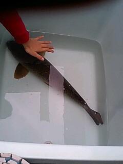 鯉2with手