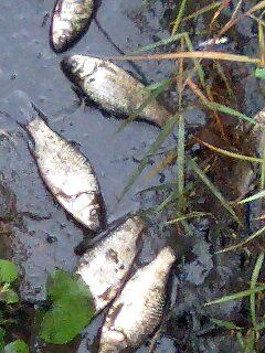 残された魚3