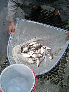 すくわれた魚1