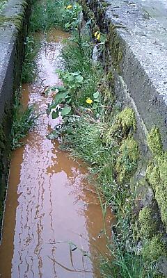 側溝の雑草5