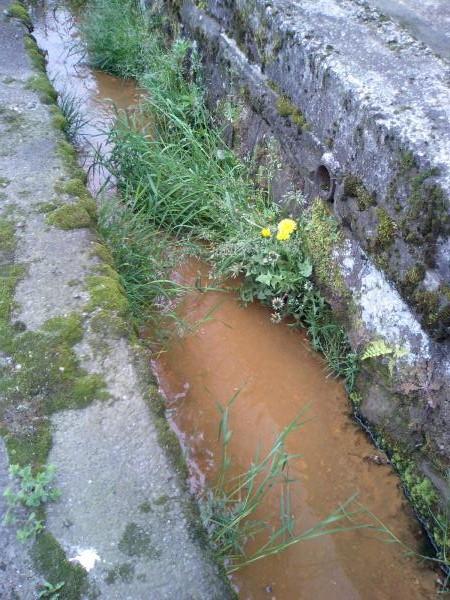 側溝の雑草10大