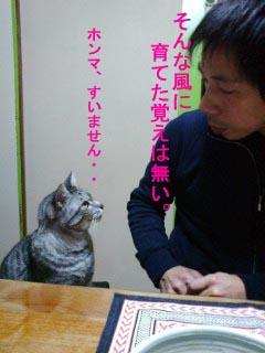 目を見るネコ