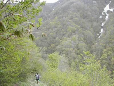 新緑の下山コース
