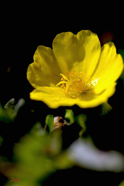 081013お花畑08
