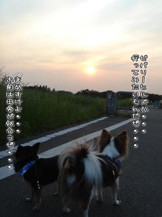 コピー ~ DSC04231