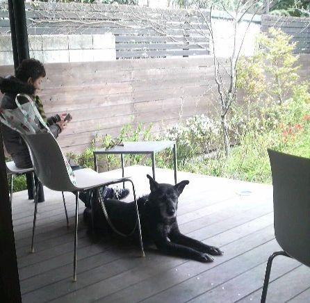2009032410180000犬