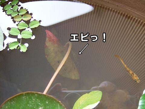 20090629-01.jpg