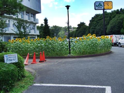 20090715-02.jpg