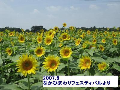 middle_1188126007.jpg