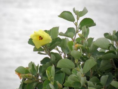 2008/8/10 真夏の葛西臨海公園で