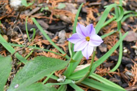 ニラバナ ( 韮花 )