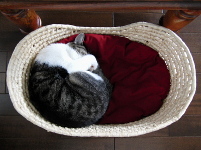 かごに猫玉
