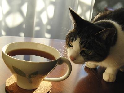 紅茶を嗅ぐ