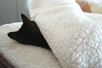 寝た猫起こすな