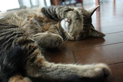 目隠し眠り
