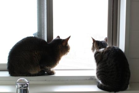 窓際会議2