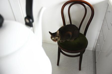 猫A、待機