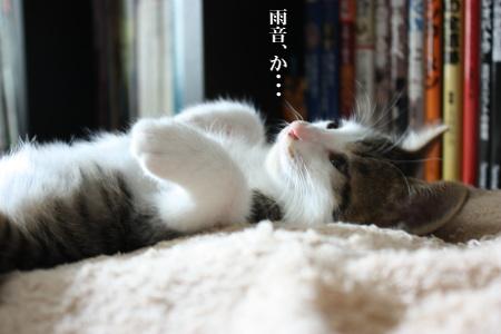 雨か・・・