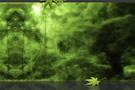 神聖な森のテンプレート