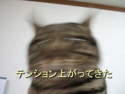136_20090327131439.jpg