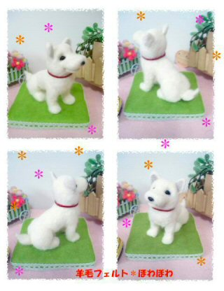 hokkaido dog2