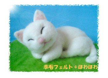 sleeping cat1